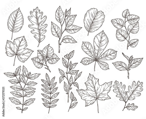 Fotografie, Obraz Hand drawn forest leaves
