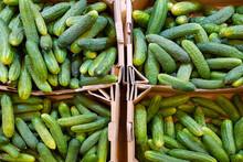 Cucumbers In Cardboard Boxes O...