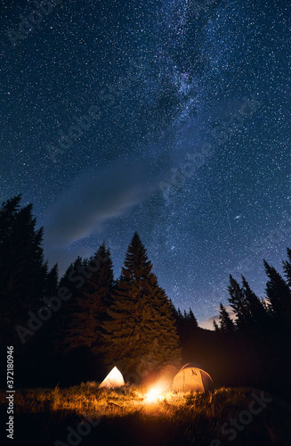 Fototapeta Bright night sky is strewn with stars and the Milky Way is visible on it. Silhouettes of huge fir trees add magic to the landscape. Camping in pine forest with burning bonfire near two tourist tents obraz na płótnie