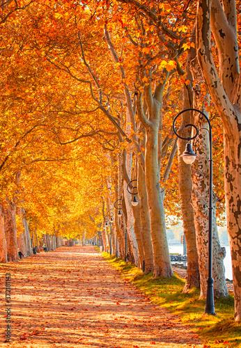 Pathway at lake Balaton in autumn Poster Mural XXL