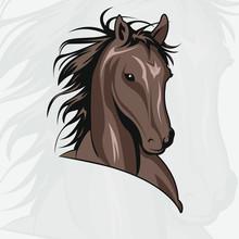 Wild Horse Head Vector Illustration