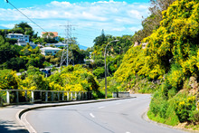 Steep S-turn Of A Mountain Road In Hilly Suburbs Of Wellington, New Zealand. Blooming Shrubs And Cozy Villa Houses Deep In Lush Green