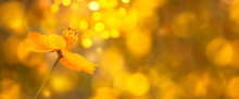 Blurred Summer Autumn Backgrou...