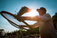 Detail Of Worker Selecting Ripen Coffea Arabica Beans With A Sieve At A Small Brazilian Family Coffee Plantation. Fair Trade Storytelling Concept. Beautiful Sun And Blue Sky On The Background.
