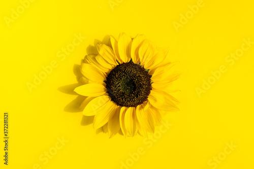 Leinwand Poster Beautiful fresh sunflower on bright yellow background.