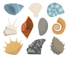 Colorful Tropical Sea Shells U...