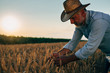 canvas print picture - middle aged man on wheat field outdoor