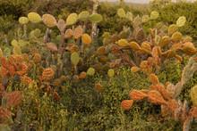 Multi Colored Cactus Growing I...