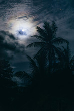 Moon In The Tropics