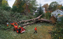 Arborists Working To Remove Fallen Tree From Suburban Backyard