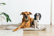 Big Brown Dog And Small Spotte...