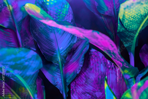 Painted palm pattern/background - 372351172