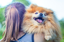 Woman Hugging, Caressing Happy Cute Ginger Senior Dog, Back View. Girl Holding On Hands Adorable Fluffy Smiling Pomeranian Spitz, Close Up. Adoption Pet. Female Takes Doggy From Shelter