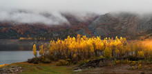 Yellow Poplar Trees Catching A Sunbeam In Autumn