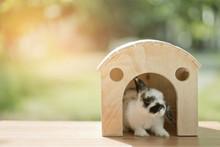 Rabbit With Green Bokeh Backgr...