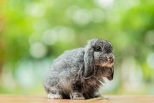 Rabbit With Green Bokeh Background, Bunny Pet