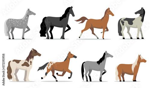 Fototapeta Stud horses set