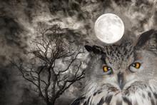 Owl On Background With Dark Ba...