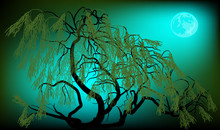 Weeping Willow On Dark Night Background