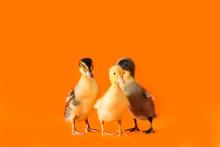 Cute Ducklings On Color Backgr...