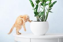 Curious Kitten Near Houseplant...