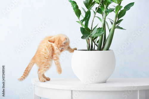 Curious kitten near houseplant on table at home Wallpaper Mural