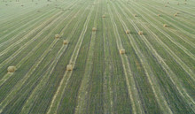 Large Harvest Field Of Wheat A...