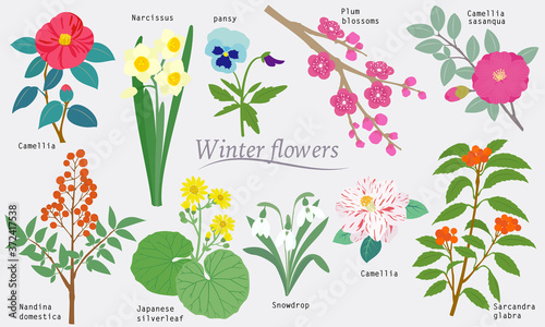 Winter Flowers Fototapet