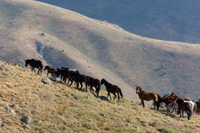 Wild Horses Fed In Rural Areas
