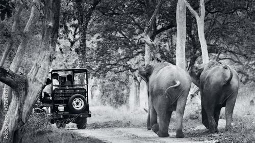 Obraz na plátně Elephant chasing safari jeep