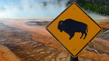 Bison Warning Sign In Yellowstone National Park
