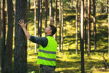 Forest Engineering And Management, Renewable Resources - Forester Hecking Quality Of Pine Tree
