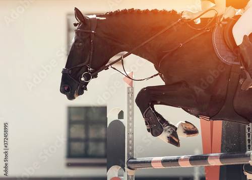 Fotografie, Obraz The black horse overcomes an obstacle.Show jumping