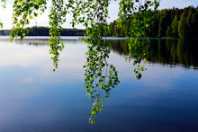 Beautiful Summer Landscape. Hanging Birch Leaves Frame The View Of A Calm Lake. Selective Focus On The Green Leaves Of A Tree.