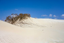 Dunes In The Sand