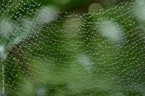 水滴がついたクモの巣 Canvas Print