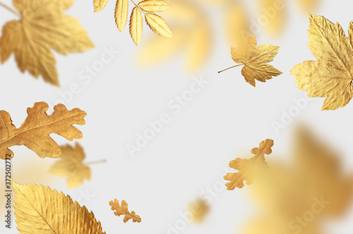 Golden flying autumn leaves of different shapes on light gray background Fototapeta