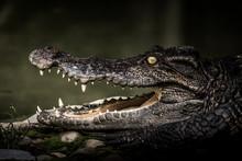 Crocodile Sunbathing