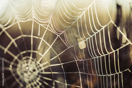 Fotografiet spider web with dew drops
