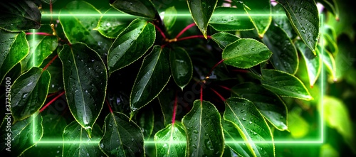 Panoramic view of leaves interspersed with green neon Fotobehang