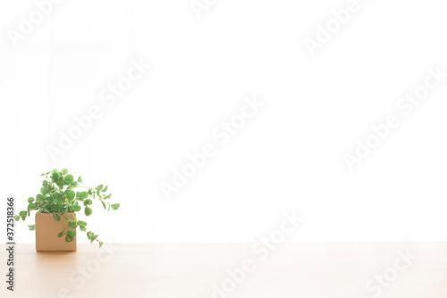 Obraz na płótnie 観葉植物