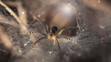 Macro Photo Of A Small Spider ...