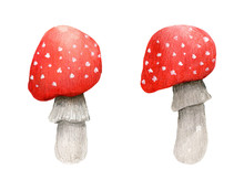 Two Amanita Isolated On White Background. Inedible Autumn Forest Mushrooms. Watercolor Hand-drawn Illustration. Perfect For For Your Project, Card, Prints, Covers, Patterns, Invitations.