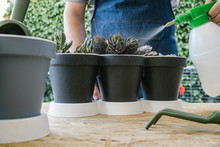 Crop Anonymous Male Gardener With Plastic Spray Bottle Watering Soil Of Potted Plants While Standing At Table Near Professional Gardening Tools Behind Bright Blossoming Flowers