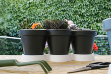 Composition Of Different Cacti In Similar Pots With Gardening Trowel And Fork Near Modern Cellphone And Plastic Spray Bottle With Scissors On Wooden Table