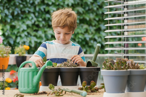 Fototapeta Adorable child in casual wear standing near similar pots while planting cactus i