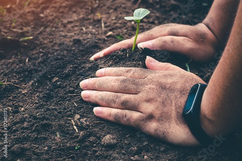 Fotografia Hand for planting tree back to the forest, Creating awareness for love wild