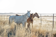 Wild Horses Next To A Road At ...