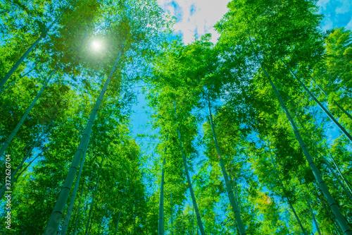 Obraz na plátně 鮮やかな緑の竹林