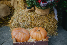 Halloween Street Decor. Pumpkins And Autumn Flowers On Hay Bale, Rustic Festive Decoration Of European City Street. Happy Thanksgiving And Halloween